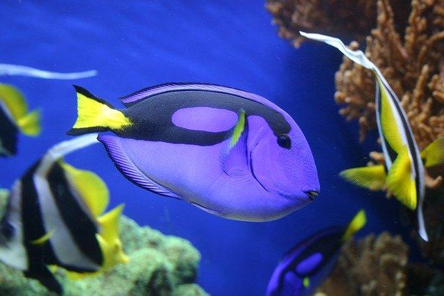 fish-1348484_640-19108430915923638536.jpg