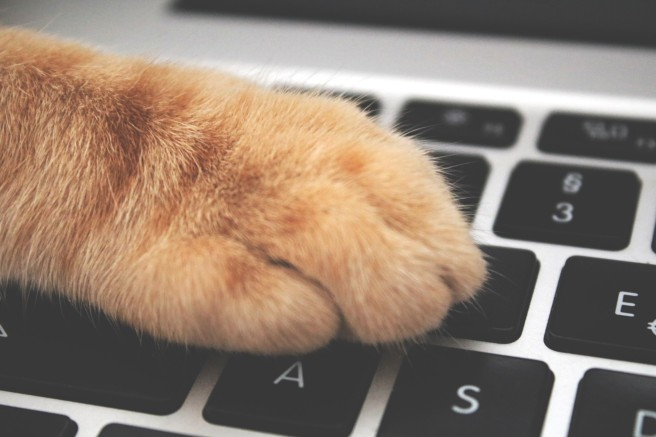 cat paw and keyboard